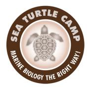 Sea Turtle Camp