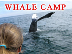 Whale Camp at the Fundy Marine Science Institute