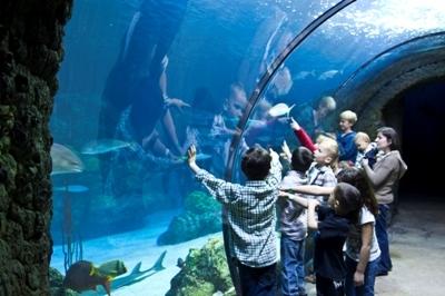 Downtown Aquarium - Denver - MySummerCamps